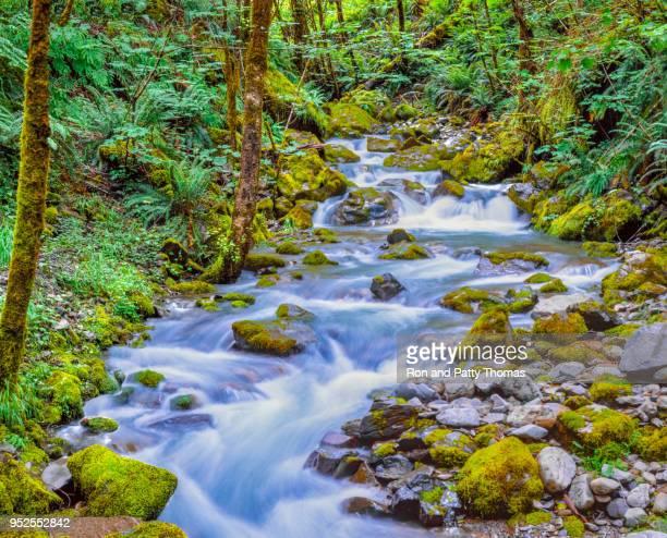 redwood creek in siskiyou national forest near brookings  oregon (p) - foresta temperata foto e immagini stock