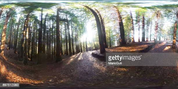 Redwood forest - 360-degree view