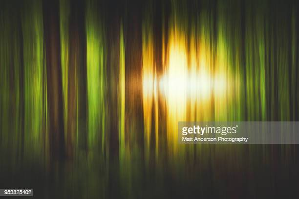 Redwood forest motion