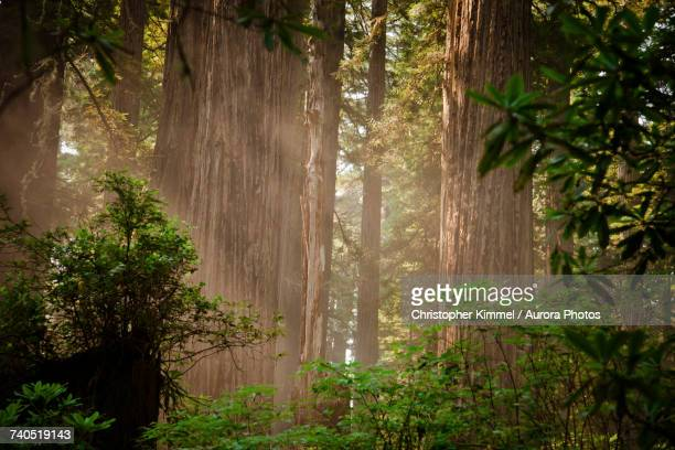 Redwood forest on sunny day