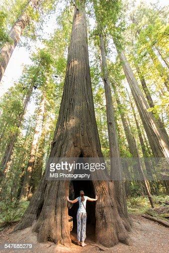 Redwood binary option login