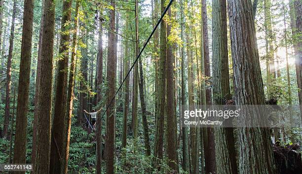 Redwood highlining