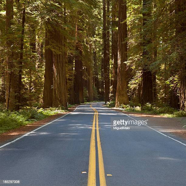 redwood highway california, usa - sequoia national forest stock photos and pictures