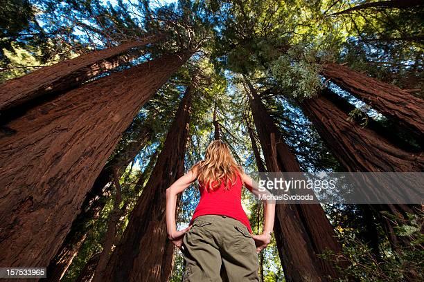 Redwood excursionismo