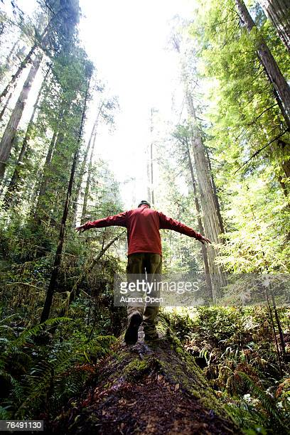 Redwood National Park, California. A hiker balances on a fallen tree.