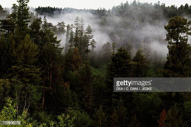 Redwood National Park California United States of America
