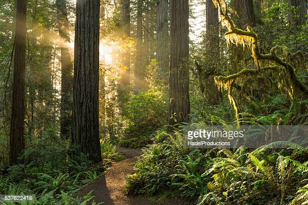 redwood national park - bush stock pictures, royalty-free photos & images