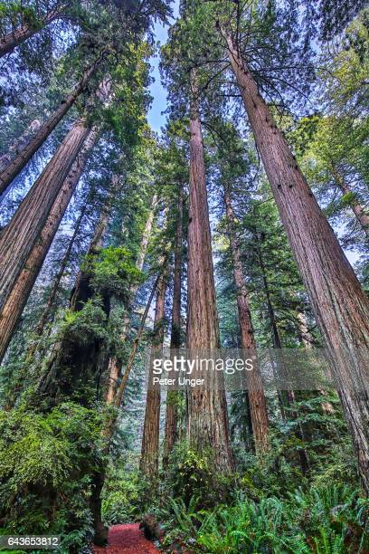 Redwood National Park,California,USA