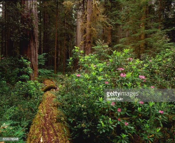 Redwood Nurse Log in California