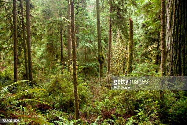 Redwood rain forest