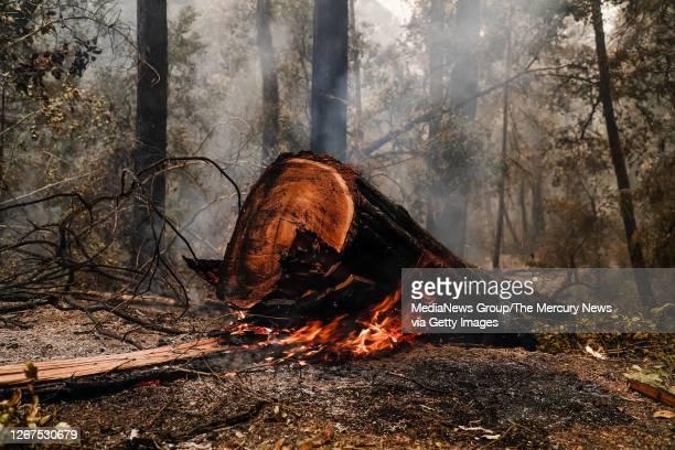 Redwood tree burns near Big Basin Redwoods State Park Headquarters & Visitor Center in Boulder Creek, Calif., on Thursday, Aug. 20, 2020.