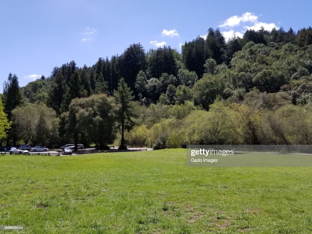 Redwoods Regional Park : Stock-Foto