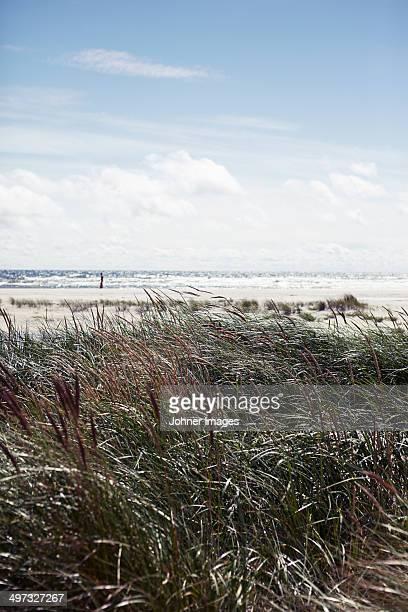 Reed at a beach