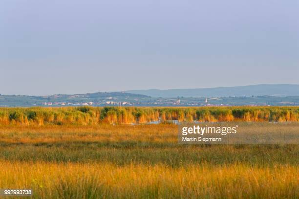 reed beds on lake neusiedl in illmitz, behind rust, lake neusiedl, seewinkel, northern burgenland, burgenland, austria - rust colored - fotografias e filmes do acervo