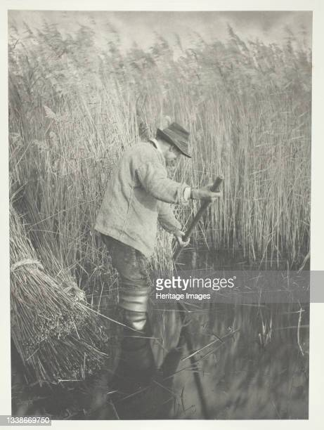 Reed-Cutter at Work, 1886. A work made of platinum print, pl. Xxv from the album 'life and landscape on the norfolk broads' ; edition of 200. Artist...