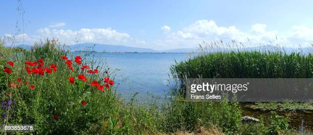reeds along a section of the lake ohrid coast, republic of macedonia - lake ohrid stock photos and pictures