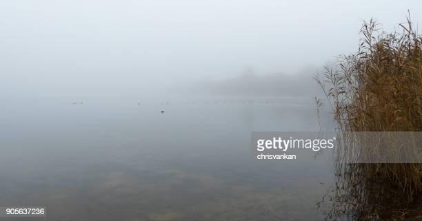 Reeds along riverbank, Enschede, Overijssel, Twente, Holland