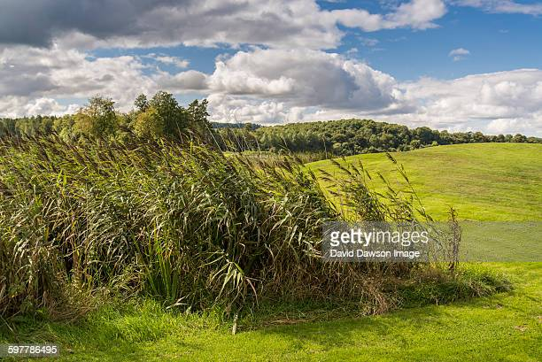reeds and grass country scene - enniskillen stock photos and pictures