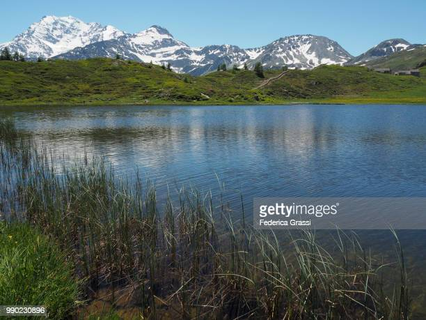 Reeds And Other Water Plants At Hopschusee, Simplon Pass