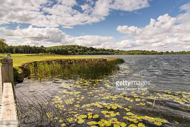 Reeds in water with grass, trees and cloud