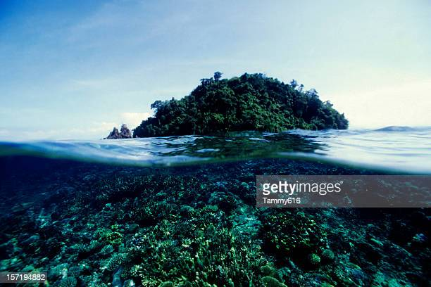 Reef and Island