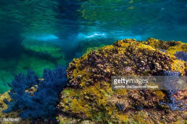 reef growth on rocks at isla mujeres, mexico. - mujeres fotos stockfoto's en -beelden