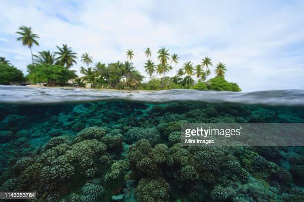 reef in tropical water, bora bora, french polynesia - bora bora photos et images de collection