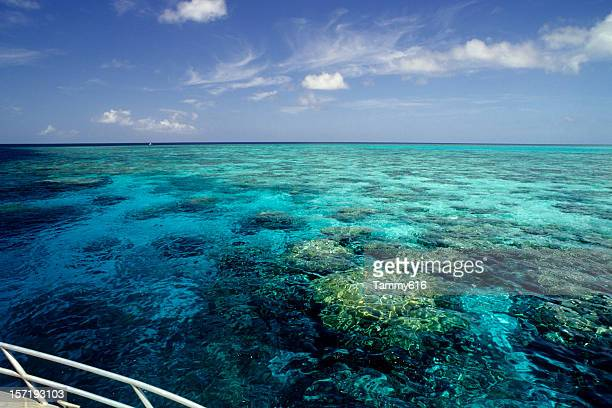 reef ride - great barrier reef stock pictures, royalty-free photos & images