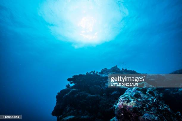 reef scene. mi'l channel, yap island, micronesia - seascape stock pictures, royalty-free photos & images