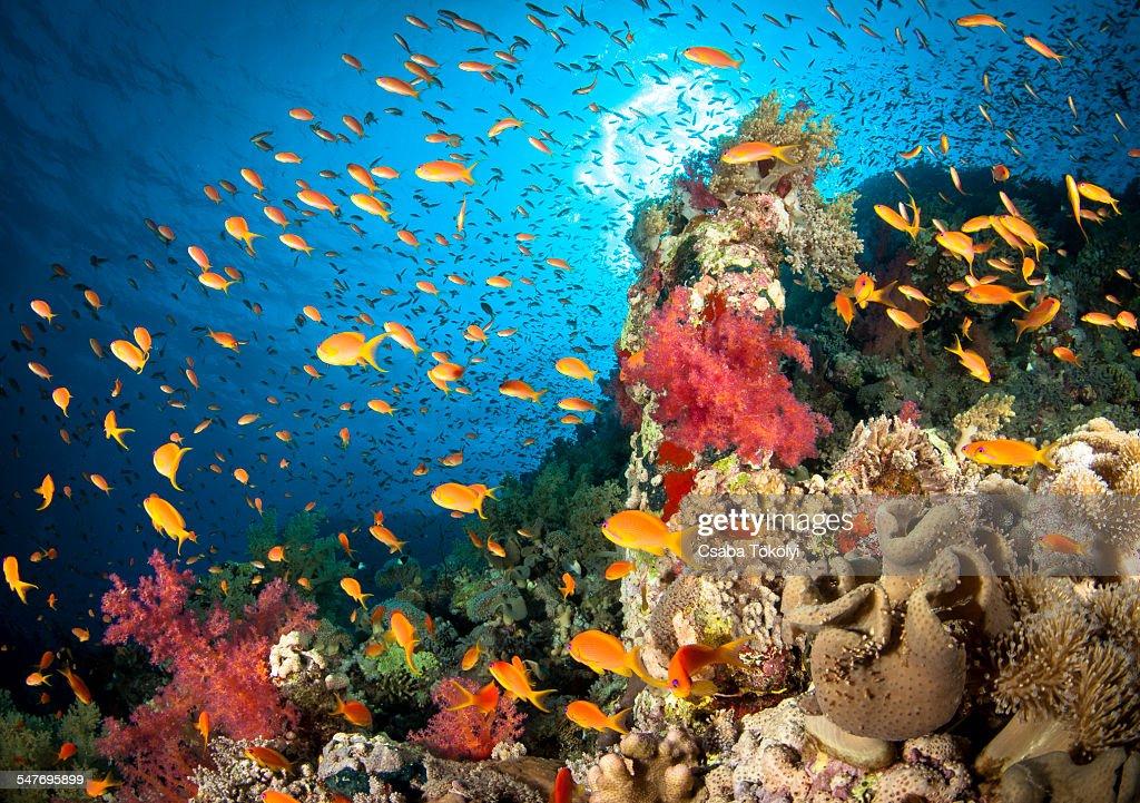 Reef scene : Stock Photo