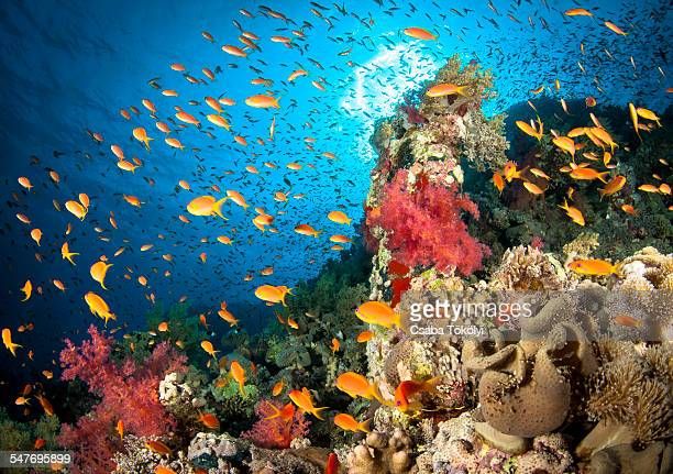 reef scene - reef stock pictures, royalty-free photos & images