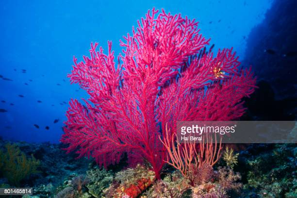 reef scene woith sea fan - cnidarian stock pictures, royalty-free photos & images