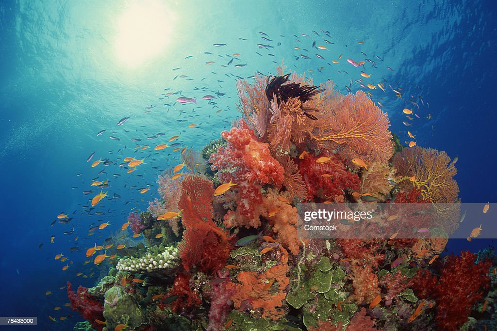 Reef scenic of hard corals , soft corals and tropical fish , South Pacific : Stockfoto