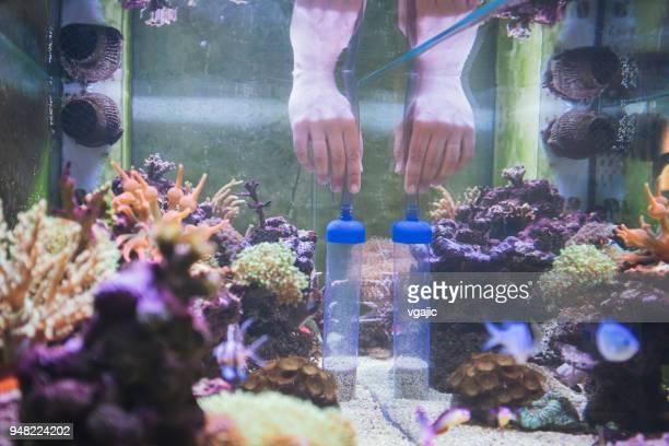 Reef Tank Maintenance