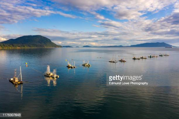 reefnet salmon fishing boats off lummi island, washington. - pacific ocean stock pictures, royalty-free photos & images