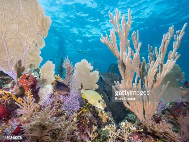 reefscape in key largo - florida keys stock pictures, royalty-free photos & images