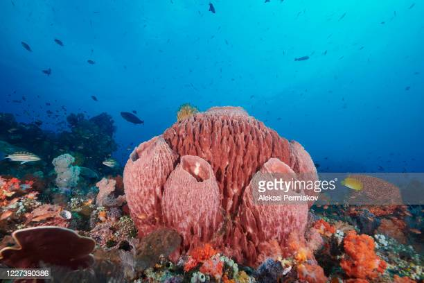 reefscape with barrel sponge - reef stock pictures, royalty-free photos & images