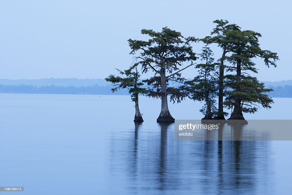 Reelfoot Lake with Trees in Water : Stock Photo
