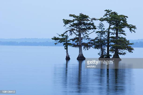 reelfoot lake with trees in water - bald cypress tree stock photos and pictures