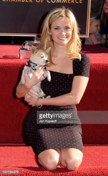 "Reese Witherspoon and ""Legally Blonde"" co-star Bruiser pose at the Reese Witherspoon Hollywood Walk Of Fame Star Induction Ceremony on December 1,..."