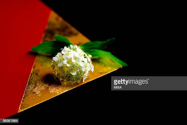 reeves' spirea (spiraea cantoniensis) on a tray - wabi sabi stock pictures, royalty-free photos & images