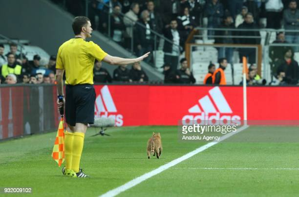 A referee interrupts the match for a while as a cat runs on the field during the UEFA Champions League Round 16 return match between Besiktas and FC...