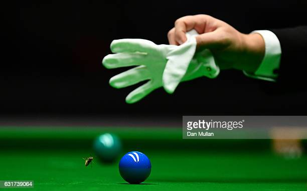 Referee Paul Collier tries to swat a wasp on the table during the first round match between Ronnie O'Sullivan of England and Liang Wenbo of China on...