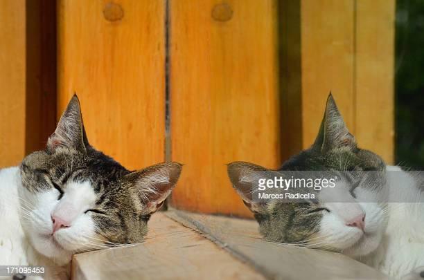 reflected sleeping cat - radicella stockfoto's en -beelden