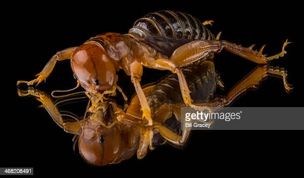 reflecting on the potato bug - potato bug stock pictures, royalty-free photos & images
