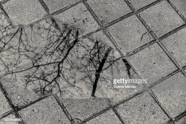 reflection in a puddle - vicente méndez fotografías e imágenes de stock