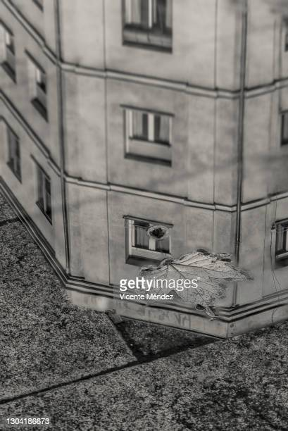 reflection in a puddle with fallen leaf - vicente méndez fotografías e imágenes de stock