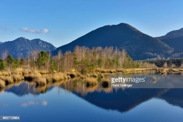 Reflection in moor pond, Flyschberge, Wendelstein, Mangfall Mountains, near Raubling, Alpine foothills, Bavaria, Germany