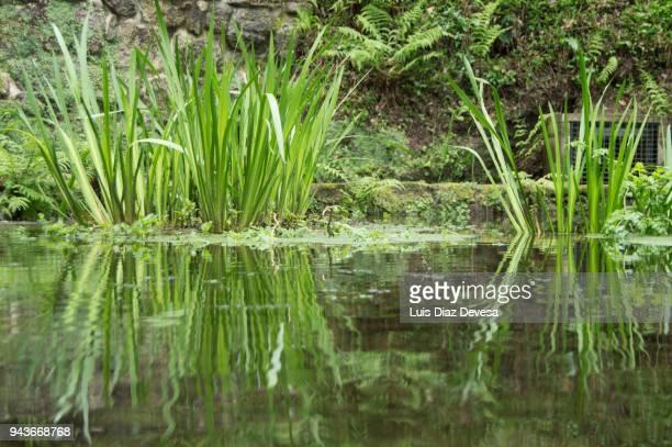 reflection in the pond - lençol freático imagens e fotografias de stock