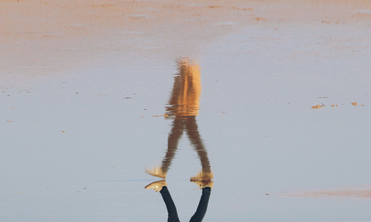 Reflection of a man walking on the beach - gettyimageskorea